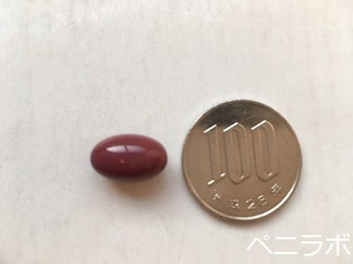 プロキオン1粒と100円玉を並べた写真